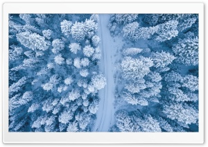 Road, Snowy Forest Trees, Winter