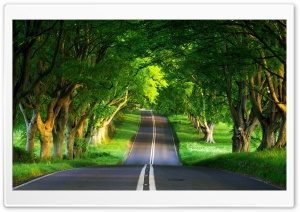 Road, Summer HD Wide Wallpaper for Widescreen