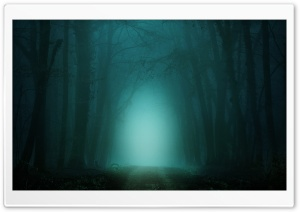Road through Forest, Fog, Night