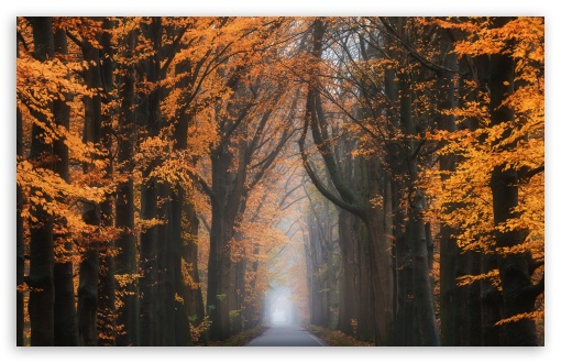 Road, Trees, Beautiful Autumn Season ❤ 4K UHD Wallpaper for Wide 16:10 5:3 Widescreen WHXGA WQXGA WUXGA WXGA WGA ; 4K UHD 16:9 Ultra High Definition 2160p 1440p 1080p 900p 720p ; Standard 4:3 5:4 3:2 Fullscreen UXGA XGA SVGA QSXGA SXGA DVGA HVGA HQVGA ( Apple PowerBook G4 iPhone 4 3G 3GS iPod Touch ) ; Smartphone 16:9 3:2 5:3 2160p 1440p 1080p 900p 720p DVGA HVGA HQVGA ( Apple PowerBook G4 iPhone 4 3G 3GS iPod Touch ) WGA ; Tablet 1:1 ; iPad 1/2/Mini ; Mobile 4:3 5:3 3:2 16:9 5:4 - UXGA XGA SVGA WGA DVGA HVGA HQVGA ( Apple PowerBook G4 iPhone 4 3G 3GS iPod Touch ) 2160p 1440p 1080p 900p 720p QSXGA SXGA ;