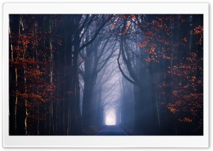 Road, Trees, Fog, Autumn Season HD Wide Wallpaper for 4K UHD Widescreen desktop & smartphone