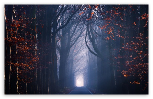 Road, Trees, Fog, Autumn Season ❤ 4K UHD Wallpaper for Wide 16:10 5:3 Widescreen WHXGA WQXGA WUXGA WXGA WGA ; 4K UHD 16:9 Ultra High Definition 2160p 1440p 1080p 900p 720p ; Standard 4:3 5:4 3:2 Fullscreen UXGA XGA SVGA QSXGA SXGA DVGA HVGA HQVGA ( Apple PowerBook G4 iPhone 4 3G 3GS iPod Touch ) ; Smartphone 16:9 3:2 5:3 2160p 1440p 1080p 900p 720p DVGA HVGA HQVGA ( Apple PowerBook G4 iPhone 4 3G 3GS iPod Touch ) WGA ; Tablet 1:1 ; iPad 1/2/Mini ; Mobile 4:3 5:3 3:2 16:9 5:4 - UXGA XGA SVGA WGA DVGA HVGA HQVGA ( Apple PowerBook G4 iPhone 4 3G 3GS iPod Touch ) 2160p 1440p 1080p 900p 720p QSXGA SXGA ;