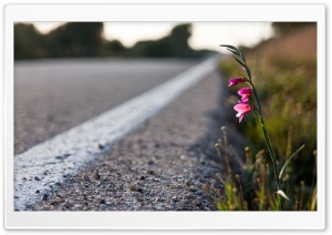 Roadside Flower HD Wide Wallpaper for Widescreen