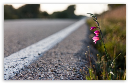 Roadside Flower HD wallpaper for Wide 16:10 5:3 Widescreen WHXGA WQXGA WUXGA WXGA WGA ; HD 16:9 High Definition WQHD QWXGA 1080p 900p 720p QHD nHD ; UHD 16:9 WQHD QWXGA 1080p 900p 720p QHD nHD ; Standard 4:3 5:4 3:2 Fullscreen UXGA XGA SVGA QSXGA SXGA DVGA HVGA HQVGA devices ( Apple PowerBook G4 iPhone 4 3G 3GS iPod Touch ) ; Tablet 1:1 ; iPad 1/2/Mini ; Mobile 4:3 5:3 3:2 16:9 5:4 - UXGA XGA SVGA WGA DVGA HVGA HQVGA devices ( Apple PowerBook G4 iPhone 4 3G 3GS iPod Touch ) WQHD QWXGA 1080p 900p 720p QHD nHD QSXGA SXGA ; Dual 5:4 QSXGA SXGA ;