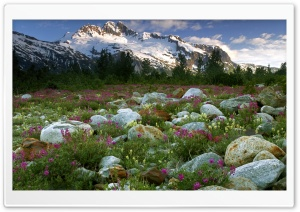 Rock Garden Alsek River British Columbia Ultra HD Wallpaper for 4K UHD Widescreen desktop, tablet & smartphone