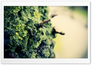 Rock Lichens HD Wide Wallpaper for Widescreen