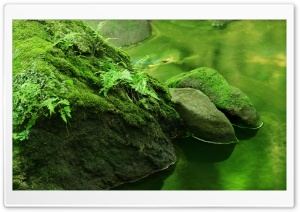 Rocks Covered In Moss HD Wide Wallpaper for Widescreen