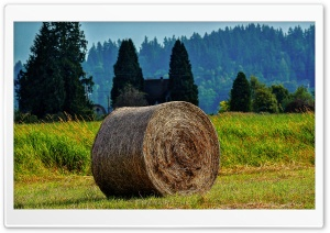 Rolled Bales HD Wide Wallpaper for 4K UHD Widescreen desktop & smartphone