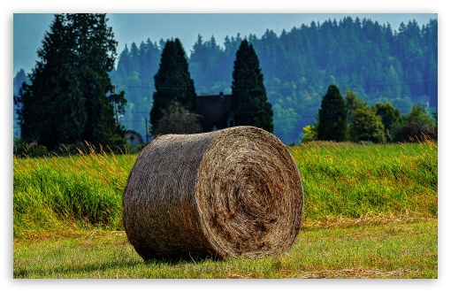Rolled Bales ❤ 4K UHD Wallpaper for Wide 16:10 5:3 Widescreen WHXGA WQXGA WUXGA WXGA WGA ; 4K UHD 16:9 Ultra High Definition 2160p 1440p 1080p 900p 720p ; UHD 16:9 2160p 1440p 1080p 900p 720p ; Standard 4:3 5:4 3:2 Fullscreen UXGA XGA SVGA QSXGA SXGA DVGA HVGA HQVGA ( Apple PowerBook G4 iPhone 4 3G 3GS iPod Touch ) ; Tablet 1:1 ; iPad 1/2/Mini ; Mobile 4:3 5:3 3:2 16:9 5:4 - UXGA XGA SVGA WGA DVGA HVGA HQVGA ( Apple PowerBook G4 iPhone 4 3G 3GS iPod Touch ) 2160p 1440p 1080p 900p 720p QSXGA SXGA ; Dual 16:10 4:3 5:4 WHXGA WQXGA WUXGA WXGA UXGA XGA SVGA QSXGA SXGA ;
