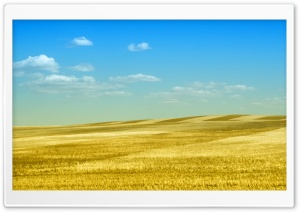 Rolling Gold HD Wide Wallpaper for Widescreen