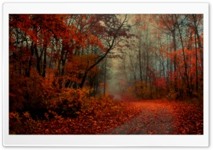 Romantic Autumn HD Wide Wallpaper for Widescreen