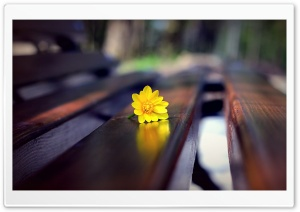 Romantic Bench HD Wide Wallpaper for Widescreen