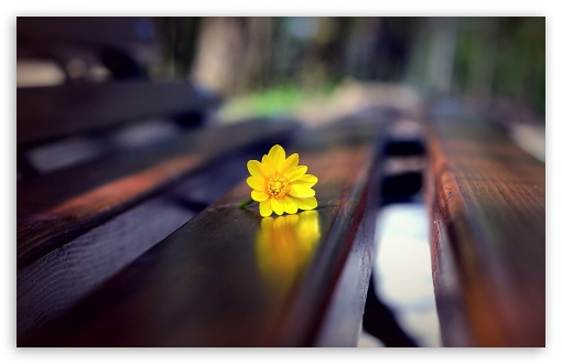 Romantic Bench 4k Hd Desktop Wallpaper For 4k Ultra Hd Tv Dual