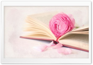 Romantic Book HD Wide Wallpaper for Widescreen