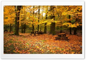 Romantic Fall HD Wide Wallpaper for Widescreen