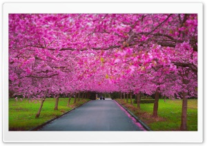 Romantic Spring HD Wide Wallpaper for Widescreen