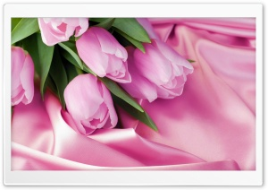 Romantic Tulips HD Wide Wallpaper for Widescreen