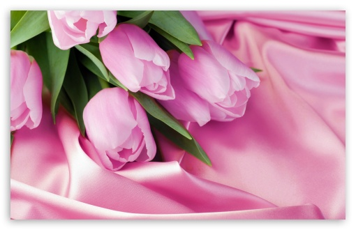 Romantic Tulips ❤ 4K UHD Wallpaper for Wide 16:10 5:3 Widescreen WHXGA WQXGA WUXGA WXGA WGA ; 4K UHD 16:9 Ultra High Definition 2160p 1440p 1080p 900p 720p ; UHD 16:9 2160p 1440p 1080p 900p 720p ; Standard 4:3 5:4 3:2 Fullscreen UXGA XGA SVGA QSXGA SXGA DVGA HVGA HQVGA ( Apple PowerBook G4 iPhone 4 3G 3GS iPod Touch ) ; Smartphone 5:3 WGA ; Tablet 1:1 ; iPad 1/2/Mini ; Mobile 4:3 5:3 3:2 16:9 5:4 - UXGA XGA SVGA WGA DVGA HVGA HQVGA ( Apple PowerBook G4 iPhone 4 3G 3GS iPod Touch ) 2160p 1440p 1080p 900p 720p QSXGA SXGA ; Dual 16:10 5:3 16:9 4:3 5:4 WHXGA WQXGA WUXGA WXGA WGA 2160p 1440p 1080p 900p 720p UXGA XGA SVGA QSXGA SXGA ;