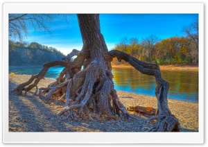 Rooted, Mississippi River at Hidden Falls Park in Saint Paul, Minnesota HD Wide Wallpaper for Widescreen