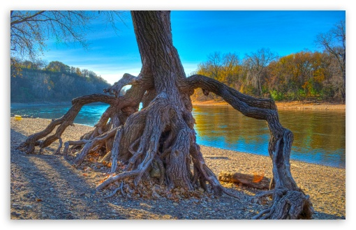 Rooted, Mississippi River at Hidden Falls Park in Saint Paul, Minnesota HD wallpaper for Wide 16:10 5:3 Widescreen WHXGA WQXGA WUXGA WXGA WGA ; HD 16:9 High Definition WQHD QWXGA 1080p 900p 720p QHD nHD ; UHD 16:9 WQHD QWXGA 1080p 900p 720p QHD nHD ; Standard 4:3 5:4 3:2 Fullscreen UXGA XGA SVGA QSXGA SXGA DVGA HVGA HQVGA devices ( Apple PowerBook G4 iPhone 4 3G 3GS iPod Touch ) ; Tablet 1:1 ; iPad 1/2/Mini ; Mobile 4:3 5:3 3:2 16:9 5:4 - UXGA XGA SVGA WGA DVGA HVGA HQVGA devices ( Apple PowerBook G4 iPhone 4 3G 3GS iPod Touch ) WQHD QWXGA 1080p 900p 720p QHD nHD QSXGA SXGA ;