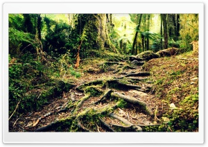 Roots HD Wide Wallpaper for Widescreen