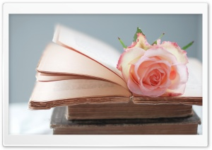 Rose Book HD Wide Wallpaper for Widescreen