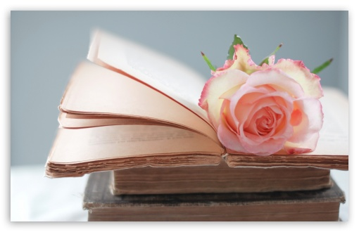Rose Book HD wallpaper for Wide 16:10 5:3 Widescreen WHXGA WQXGA WUXGA WXGA WGA ; HD 16:9 High Definition WQHD QWXGA 1080p 900p 720p QHD nHD ; Standard 4:3 5:4 3:2 Fullscreen UXGA XGA SVGA QSXGA SXGA DVGA HVGA HQVGA devices ( Apple PowerBook G4 iPhone 4 3G 3GS iPod Touch ) ; Tablet 1:1 ; iPad 1/2/Mini ; Mobile 4:3 5:3 3:2 16:9 5:4 - UXGA XGA SVGA WGA DVGA HVGA HQVGA devices ( Apple PowerBook G4 iPhone 4 3G 3GS iPod Touch ) WQHD QWXGA 1080p 900p 720p QHD nHD QSXGA SXGA ;