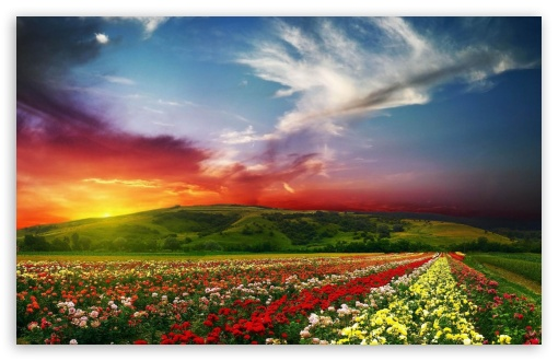 Rose Flower Field Background HD HD wallpaper for Wide 16:10 5:3 Widescreen WHXGA WQXGA WUXGA WXGA WGA ; HD 16:9 High Definition WQHD QWXGA 1080p 900p 720p QHD nHD ; Standard 4:3 5:4 3:2 Fullscreen UXGA XGA SVGA QSXGA SXGA DVGA HVGA HQVGA devices ( Apple PowerBook G4 iPhone 4 3G 3GS iPod Touch ) ; Tablet 1:1 ; iPad 1/2/Mini ; Mobile 4:3 5:3 3:2 16:9 5:4 - UXGA XGA SVGA WGA DVGA HVGA HQVGA devices ( Apple PowerBook G4 iPhone 4 3G 3GS iPod Touch ) WQHD QWXGA 1080p 900p 720p QHD nHD QSXGA SXGA ;
