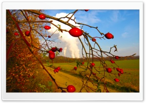 Rose Hips HD Wide Wallpaper for Widescreen