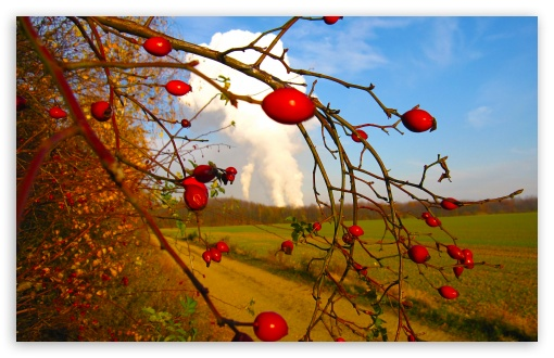 Rose Hips HD wallpaper for Wide 16:10 5:3 Widescreen WHXGA WQXGA WUXGA WXGA WGA ; HD 16:9 High Definition WQHD QWXGA 1080p 900p 720p QHD nHD ; UHD 16:9 WQHD QWXGA 1080p 900p 720p QHD nHD ; Standard 4:3 5:4 3:2 Fullscreen UXGA XGA SVGA QSXGA SXGA DVGA HVGA HQVGA devices ( Apple PowerBook G4 iPhone 4 3G 3GS iPod Touch ) ; Tablet 1:1 ; iPad 1/2/Mini ; Mobile 4:3 5:3 3:2 16:9 5:4 - UXGA XGA SVGA WGA DVGA HVGA HQVGA devices ( Apple PowerBook G4 iPhone 4 3G 3GS iPod Touch ) WQHD QWXGA 1080p 900p 720p QHD nHD QSXGA SXGA ; Dual 4:3 5:4 UXGA XGA SVGA QSXGA SXGA ;