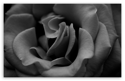 Rose Monochrome HD wallpaper for Wide 16:10 5:3 Widescreen WHXGA WQXGA WUXGA WXGA WGA ; HD 16:9 High Definition WQHD QWXGA 1080p 900p 720p QHD nHD ; Standard 4:3 5:4 3:2 Fullscreen UXGA XGA SVGA QSXGA SXGA DVGA HVGA HQVGA devices ( Apple PowerBook G4 iPhone 4 3G 3GS iPod Touch ) ; iPad 1/2/Mini ; Mobile 4:3 5:3 3:2 16:9 5:4 - UXGA XGA SVGA WGA DVGA HVGA HQVGA devices ( Apple PowerBook G4 iPhone 4 3G 3GS iPod Touch ) WQHD QWXGA 1080p 900p 720p QHD nHD QSXGA SXGA ;