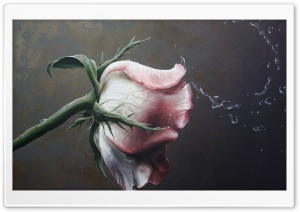 Rose Painting HD Wide Wallpaper for Widescreen