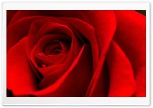 Roses Are Red HD Wide Wallpaper for Widescreen