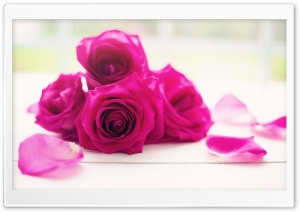 Roses Good Morning HD Wide Wallpaper for Widescreen