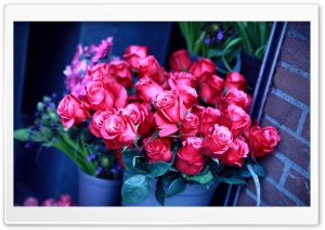 Roses In A Vase HD Wide Wallpaper for Widescreen