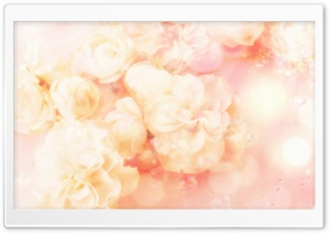 Roses Magic 4 HD Wide Wallpaper for Widescreen