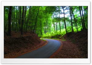 Route in Forest HD Wide Wallpaper for Widescreen