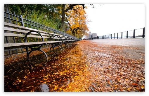 Row of Benches, Autumn HD wallpaper for Wide 16:10 5:3 Widescreen WHXGA WQXGA WUXGA WXGA WGA ; HD 16:9 High Definition WQHD QWXGA 1080p 900p 720p QHD nHD ; Standard 4:3 5:4 3:2 Fullscreen UXGA XGA SVGA QSXGA SXGA DVGA HVGA HQVGA devices ( Apple PowerBook G4 iPhone 4 3G 3GS iPod Touch ) ; Tablet 1:1 ; iPad 1/2/Mini ; Mobile 4:3 5:3 3:2 16:9 5:4 - UXGA XGA SVGA WGA DVGA HVGA HQVGA devices ( Apple PowerBook G4 iPhone 4 3G 3GS iPod Touch ) WQHD QWXGA 1080p 900p 720p QHD nHD QSXGA SXGA ; Dual 4:3 5:4 UXGA XGA SVGA QSXGA SXGA ;