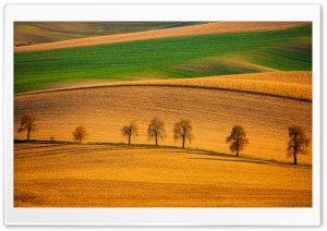 Row of Trees, Hills, Landscape Ultra HD Wallpaper for 4K UHD Widescreen desktop, tablet & smartphone