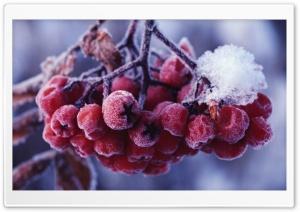 Rowans Fruits Ultra HD Wallpaper for 4K UHD Widescreen desktop, tablet & smartphone