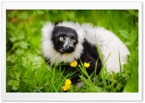 Ruffed Lemur Habitat HD Wide Wallpaper for 4K UHD Widescreen desktop & smartphone