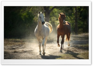 Runaway Horses HD Wide Wallpaper for Widescreen