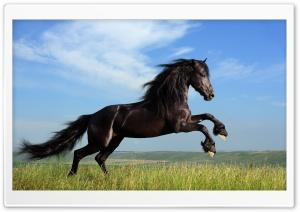 Running HD Wide Wallpaper for 4K UHD Widescreen desktop & smartphone