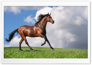 Running Horse HD Wide Wallpaper for Widescreen