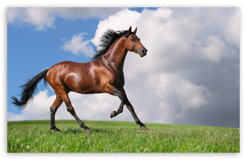 Running Horse 4k Hd Desktop Wallpaper For 4k Ultra Hd Tv Tablet