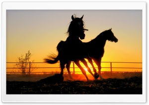 Running Horses HD Wide Wallpaper for Widescreen