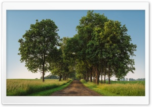 Rural Road, Green Trees, Landscape Ultra HD Wallpaper for 4K UHD Widescreen desktop, tablet & smartphone