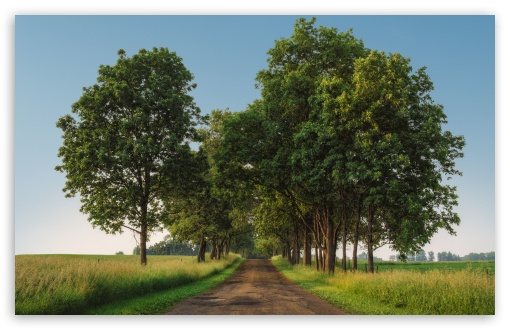 rural road green trees landscape wallpapers