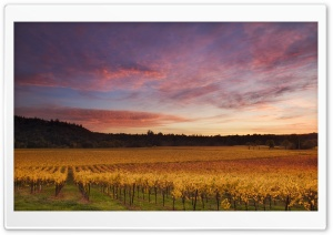 Russian River Valley, California HD Wide Wallpaper for Widescreen