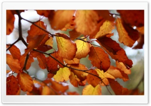 Rust Colored Autumn Leaves HD Wide Wallpaper for 4K UHD Widescreen desktop & smartphone
